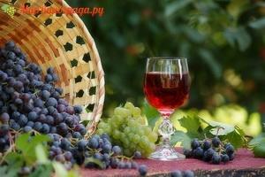 Делаем вино из винограда Изабелла