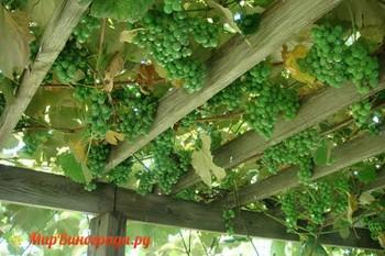 Арки под виноград деревянные