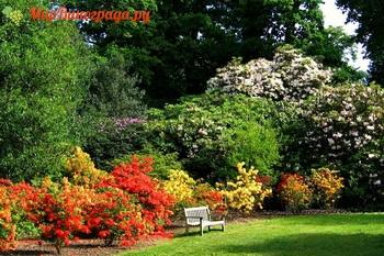 Цветущие кусты для красочных тенистых уголков в саду