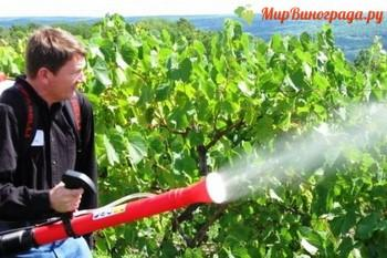 Опрыскивание винограда от вредителей и болезней