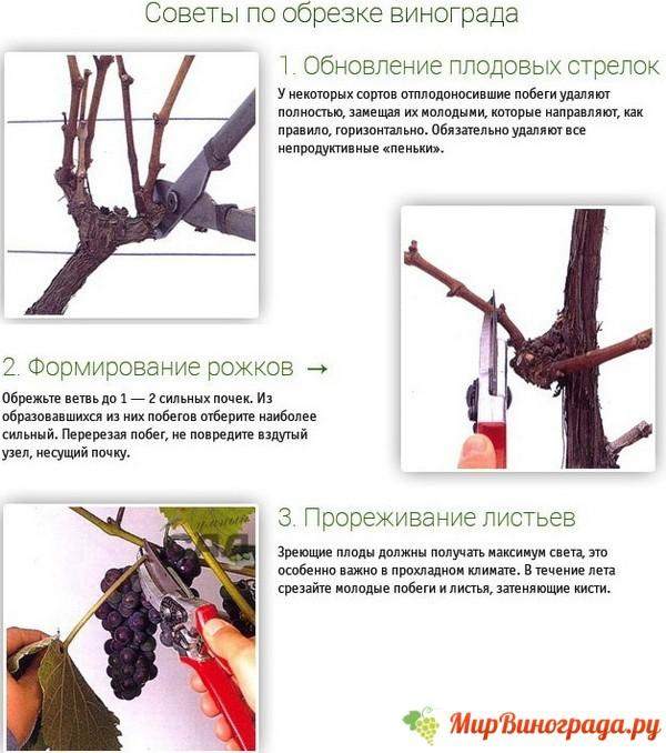 obrezka-vinograda