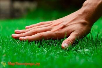 Идеальный зеленый газон