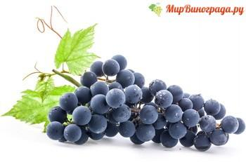 Dark-Grapes