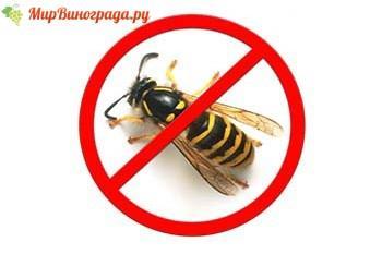 Борьба с насекомыми химическими средствами