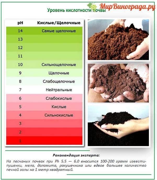 Как определить кислотность