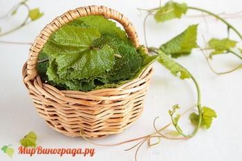 Экстракт из виноградных листьев