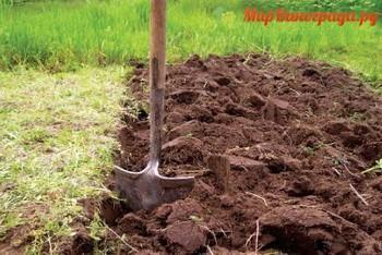Почва на дачном участке