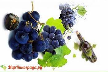 Виноград бастардо