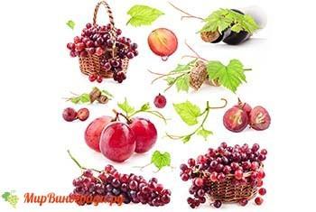 Виноград бордо применение