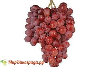 Виноград Кримсон Сидлис