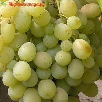 Виноград Аку Аку