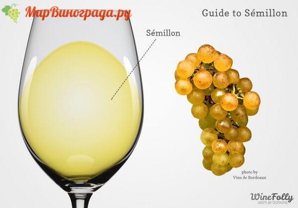 semillon-wine-and-grapes