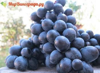 Виноград Неро