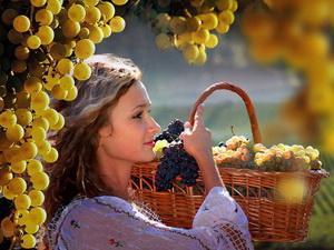 Девушка собирает виноград